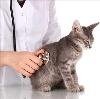 Ветеринарные клиники в Новых Бурасах